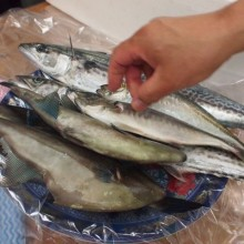 能登の魚たち